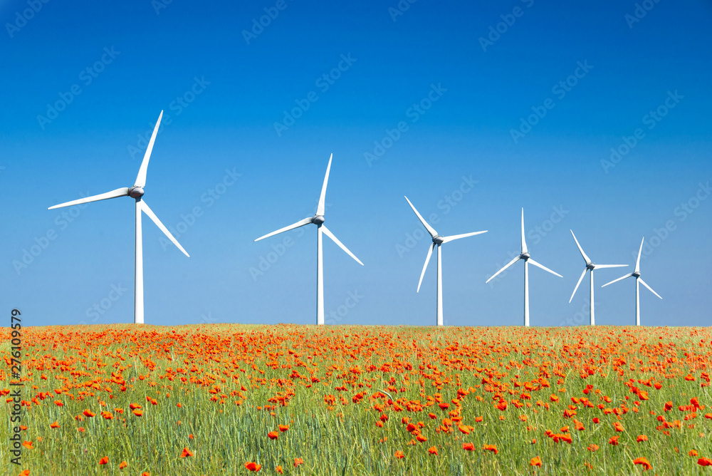 Fototapety, obrazy: Graphic modern landscape of wind turbines aligned in a poppies field