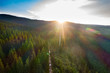 Sunlight in spruce forest in the sunset - drone view.