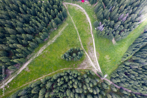 Fresh pine forest drone view.