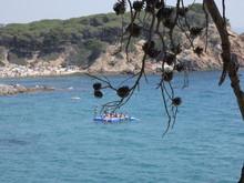 Piñas, Fruto Del Pino En Contraluz En Un Acantilado Del Mediterráneo. La Piña Está Seca, ésta Se Suele Utilizar Como Ornamento Decorativo