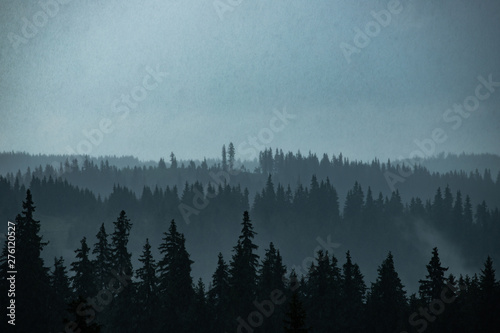 Poster Morning with fog Pine forest silhouette.
