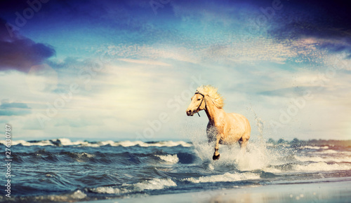 Foto auf Leinwand Beige Beautiful horse galloping along the beach.