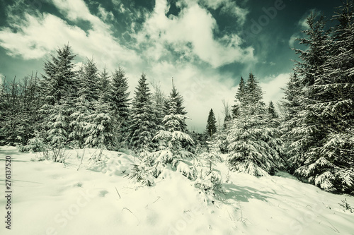 Photo Stands Roe winter landscape with snowy trees