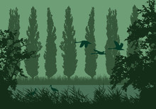 Realistic Landscape Illustration With Wetlands And Swamp. Reeds And Green Grass With Trees, Poplars And Flying Birds. Storks And Swans Under Morning Sky, Vector