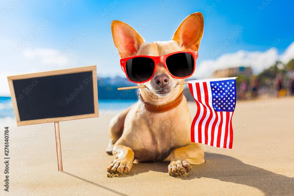 Fototapety, obrazy: surfer dog  at the beach