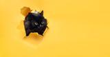 Śmieszny czarny kot patrzy przez wyrwany otwór w żółtym papierze. Niegrzeczne zwierzaki i psotne zwierzęta domowe. Zabawa w chowanego. Skopiuj miejsce.