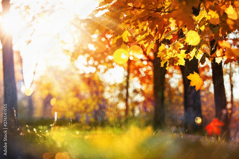 Fototapety, obrazy: Fall Scene. Bokeh effect. Trees and Leaves in Sunlight Rays