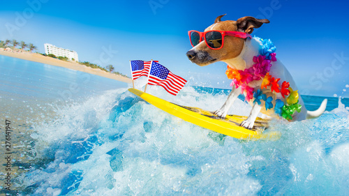 Photo sur Aluminium Chien de Crazy surfer dog at the beach