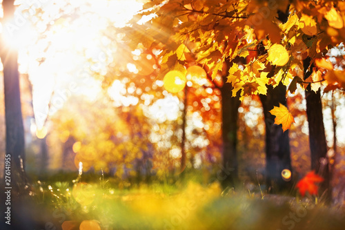 Wall Murals Autumn Fall Scene. Bokeh effect. Trees and Leaves in Sunlight Rays