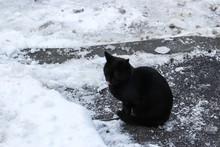 The Image Of Black Cat Sitting...