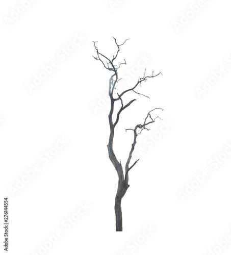 Fotografie, Obraz  Dead tree isolated on white background