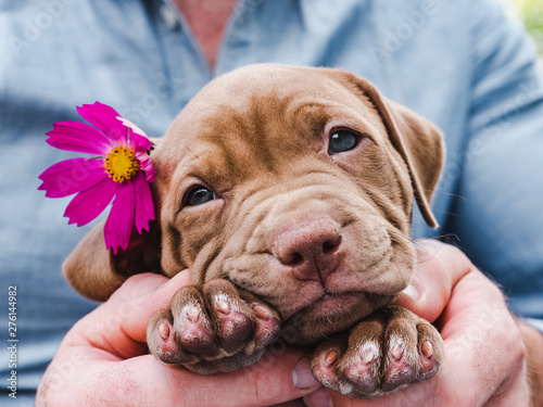 Cute, charming puppy and a bright, pink flower. Close-up. Pet Care Concept - 276144982