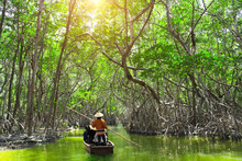 People Boating In Mangrove For...