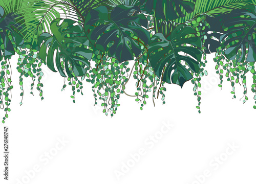 fototapeta na lodówkę Vector Tropical palms, plants, leaf, foliage, monstera