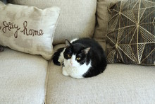 Cat And Cushions At Home