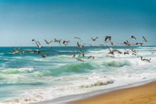 Flock Of Pelicans Flying Over The Ocean. Stormy Waves, Blue Sky Background