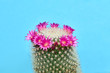canvas print picture Cactus Green Fashion with Pink flower. Art gallery Design. Minimal Stillife. Vanilla Trendy Blue Color. Sweet Summer Style. Neon cactus Mood. Creative fashionable
