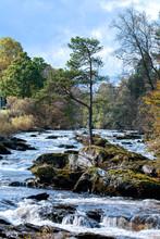 Tree In The Falls Of Dochart, Killin, Scottish Highlands