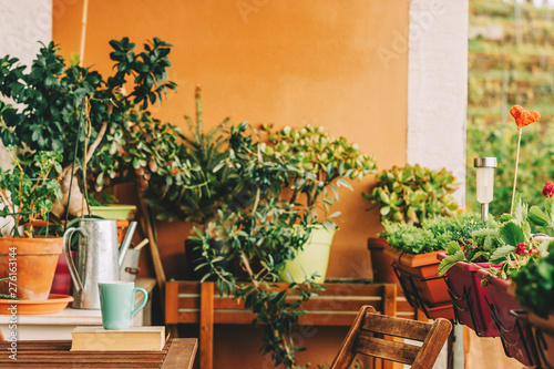 Cozy summer balcony with many potted plants, cup of tea and old vintage book Canvas Print