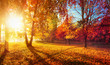 Leinwanddruck Bild - Autumn Landscape. Fall Scene.Trees and Leaves in Sunlight Rays