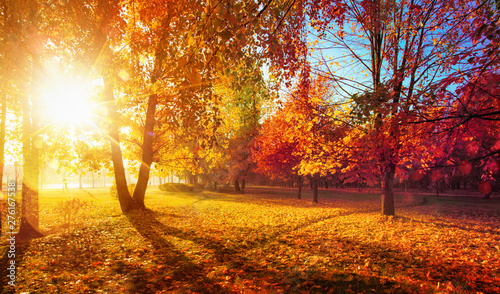 Foto auf AluDibond Rotglühen Autumn Landscape. Fall Scene.Trees and Leaves in Sunlight Rays