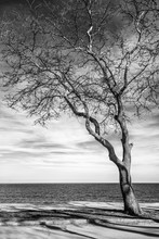 Stunning Black And White Image Of A Lonely Tree At Sea Shore