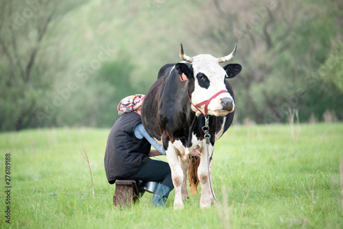 Papiers peints Vache Woman milking black and white cow hands in the field