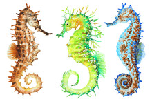 Colorful Seahorses, Hand Drawn...