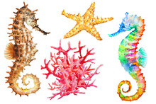 Group Of Colorful Seahorses, R...