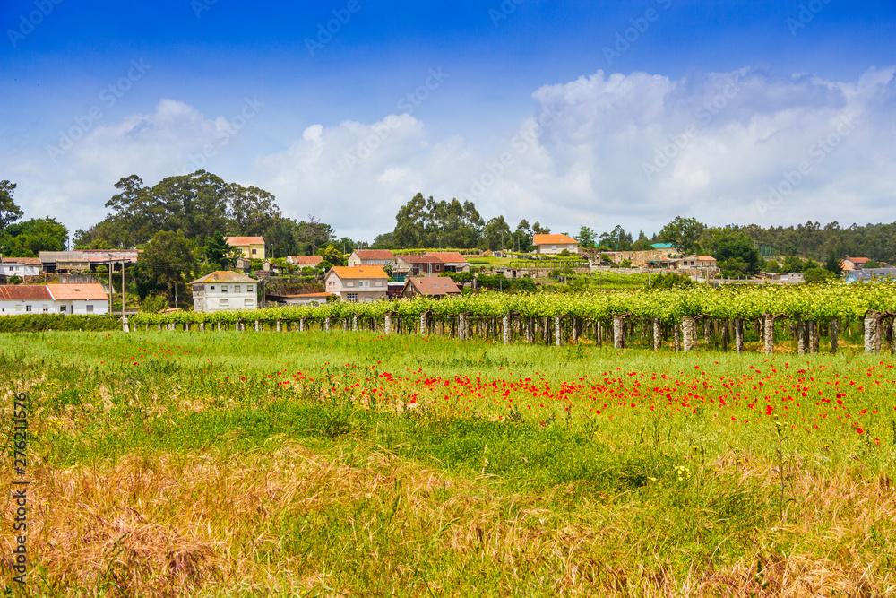 Fototapety, obrazy: Farmlands in Oubina village