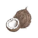 Hand drawn coconut with half - 276212571