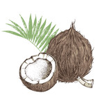 Hand drawn coconut with half and leaves - 276212596