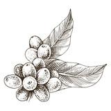 Hand drawn coffee branch - 276212740