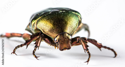 Valokuvatapetti Rose chafer Cetonia aurata on white background