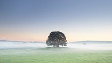 Copse Of Trees And Low Lying Mist At Airton Near Malham, Malhamdale, Yorkshire Dales, Yorkshire