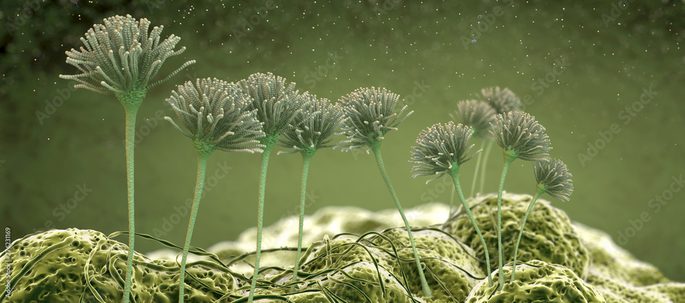 Fototapeta Microscopic image of growing molds or mold fungus and spores - 3d illustration