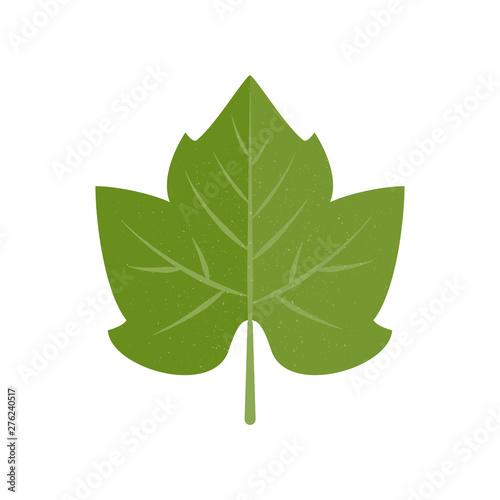 Green vector grape leaf in flat style Fototapete