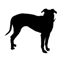 Blue Lacy Dog, Silhouette, Nor...