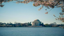 Washington's Thomas Jefferson Memorial With Cherry Blossoms Branches Above It