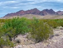 USA, Nevada, Clark COunty, El Dorado Valley: Screwbean Mesquite Trees (Acacia Greggii) And Creosote Bush (Larrea Tridentata) In A Mojave Desert Wash In Front Of Purple River Mountains