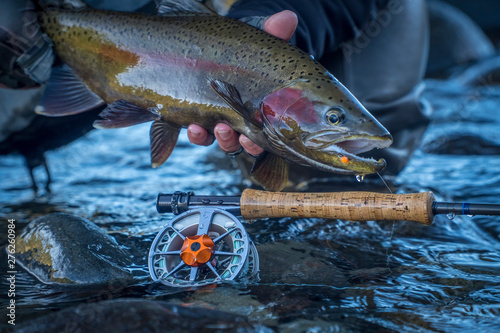Fotografia Brown & Rainbow trout gently released