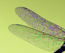 Dragonfly Wings Abstract Wildl...