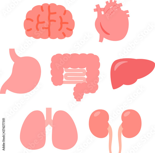 Fotografie, Obraz かわいい臓器、内臓のイラストセット