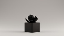 Black Succulent 3d Illustratio...