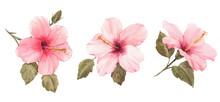 Watercolor Hibiscus Illustration