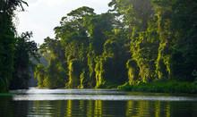 Tortuguero River, Tortuguero National Park, Costa Rica, Central America, America