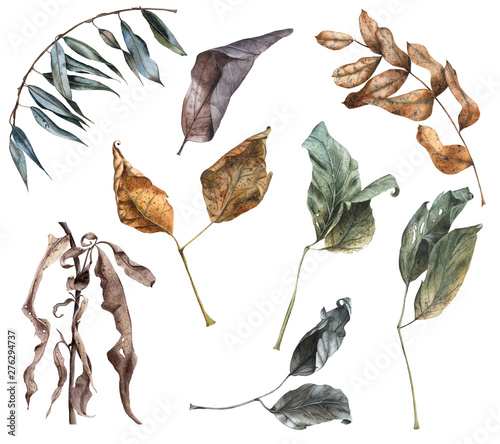Set of Watercolor Hand Drawn Dry Autumn Leaves Fototapeta