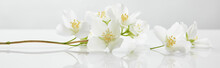 Panoramic Shot Of Jasmine Flowers On White Surface