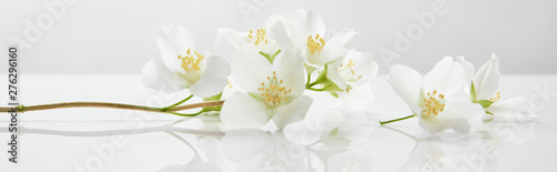 Spoed Fotobehang Bloemenwinkel panoramic shot of jasmine flowers on white surface