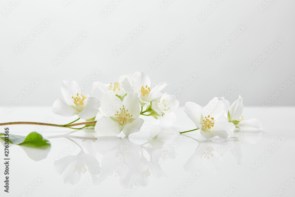 Fototapety, obrazy: fresh and natural jasmine flowers on white surface